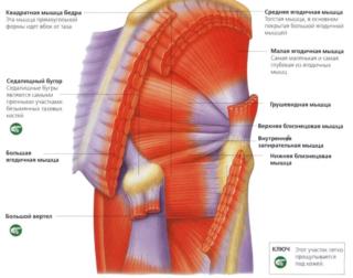 Воспаление связок тазобедренного сустава лечение народными средствами крем от болей в мышцах и суставах